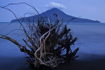 Roots of a fallen tree with Rakata in the background. (Photo: Tom Pfeiffer)