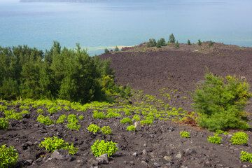 Kipuka (islands) of forest between the 1990's lava flows. (Photo: Tom Pfeiffer)