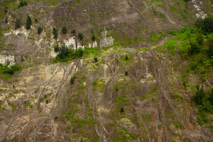 How trees can find hold in the vertical wall full with dikes is amazing. (Photo: Tom Pfeiffer)