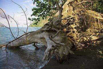 krakatau_e32771.jpg (Photo: Tom Pfeiffer)