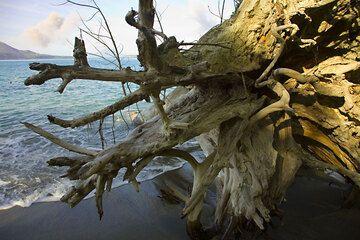 krakatau_e32772.jpg (Photo: Tom Pfeiffer)