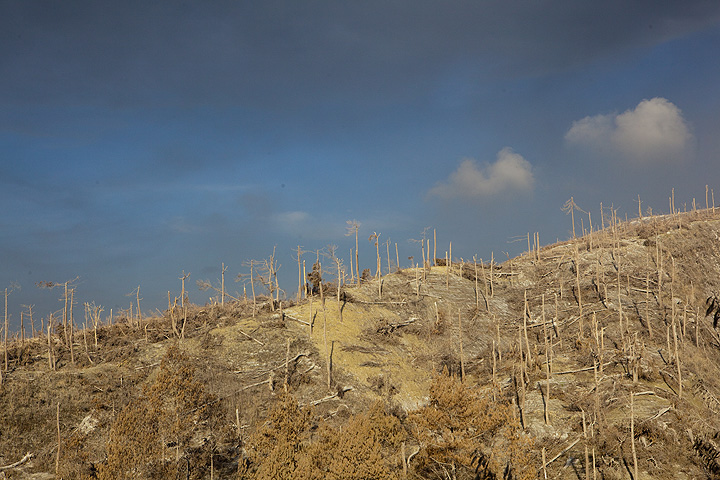 Forest devastated by pyroclastic surges (hot, turbulent, fast-moving and deadly clouds of hot gasses mixed with volcanic ash) during the 2010 eruption of Merapi volcano. (Photo: Tom Pfeiffer)