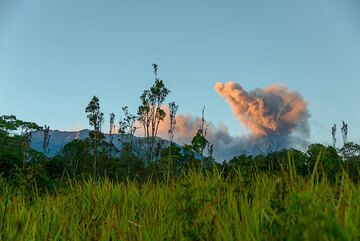 In the morning of 14 August, the volcano is very active, producing ash plumes every few minutes. We are at the start of the trail, still far from the volcano. (Photo: Tom Pfeiffer)