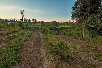 Fields with various crops, e.g. chili and coffee. (Photo: Tom Pfeiffer)