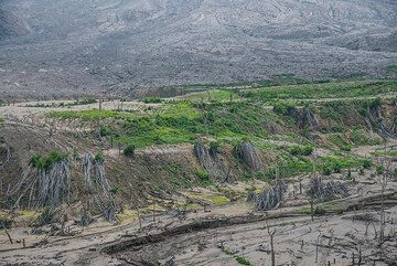 View over the northern banks of the canyon of Sukameriah. (Photo: Tom Pfeiffer)