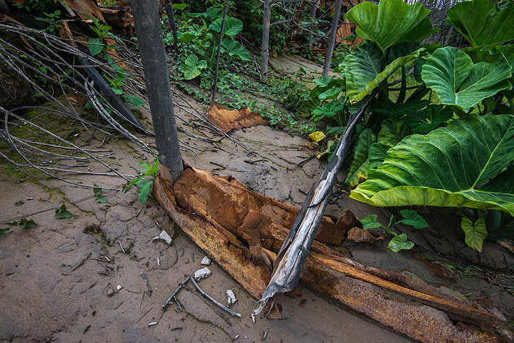 The hurricane-force of the pyroclastic surge wrapped pieces of metal around a tree trunk. (Photo: Tom Pfeiffer)