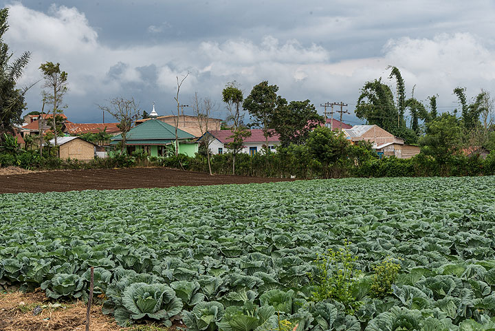 Rain clouds cover the skies over a village and a cabbage field (Photo: Tom Pfeiffer)