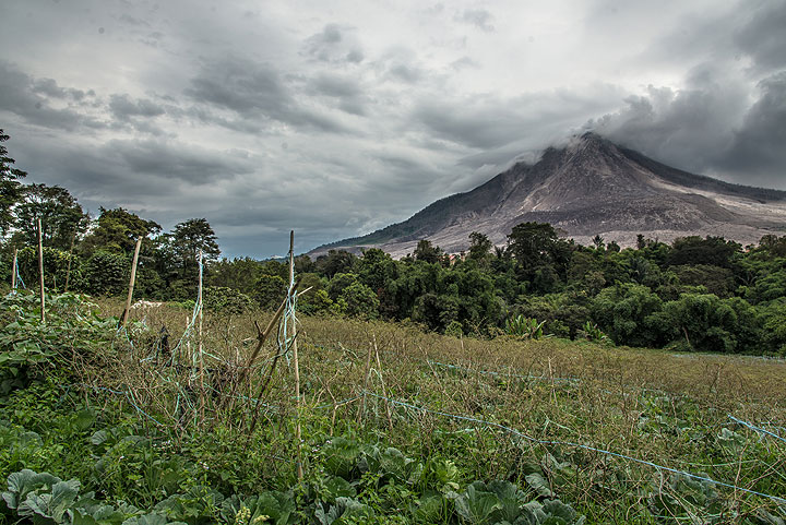 Field with beans in front of Sinabung volcano (Photo: Tom Pfeiffer)