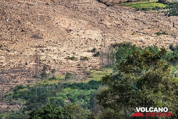 Margin of devastation zone at the eastern foot of the volcano. (Photo: Tom Pfeiffer)