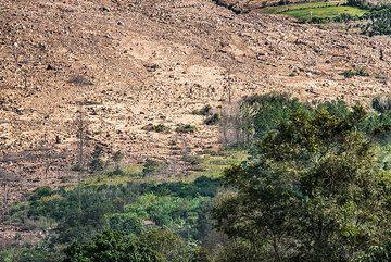 Margin of devastation zone at the eastern foot of the volcano. (Photo: Tom Pfeiffer)