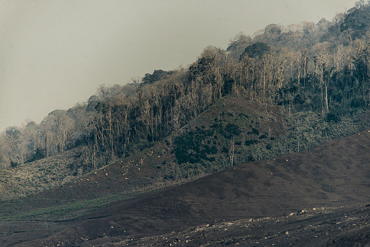Much of the ash has drifted west, covering what used to be lush green forest. (Photo: Tom Pfeiffer)