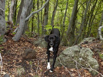"""""""Our"""" dog in the beautiful forest of Etna. (Photo: Tobias Schorr)"""