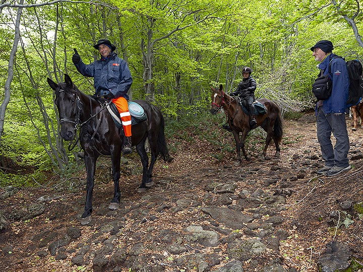 Sometimes you can meet even horses in the forests around Etna volcano. (Photo: Tobias Schorr)