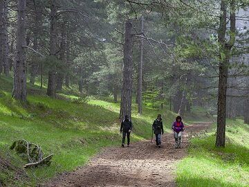 Hiking around Etna is a pleasure! There are many beautiful forests and nice hiking paths. (Photo: Tobias Schorr)