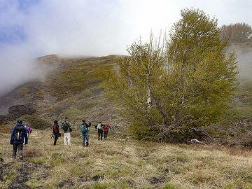The trees near an former fissure eruption caught lava bombs... (Photo: Tobias Schorr)