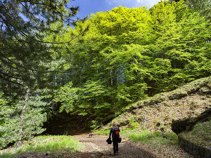 Hking through the green forests of Etna volcano. (Photo: Tobias Schorr)