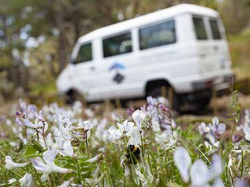 The spring and a bee and our 4x4 vehicle. (Photo: Tobias Schorr)