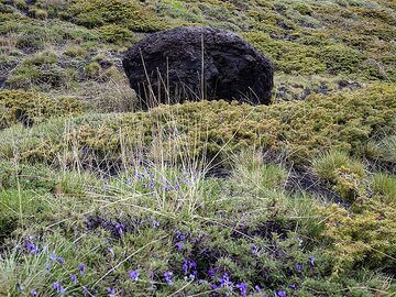 A huge lava bomb an pale flowers in spring at Etna volcano. (Photo: Tobias Schorr)