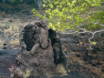 A lava tube in which a tree was burned by the hot lava. (Photo: Tobias Schorr)