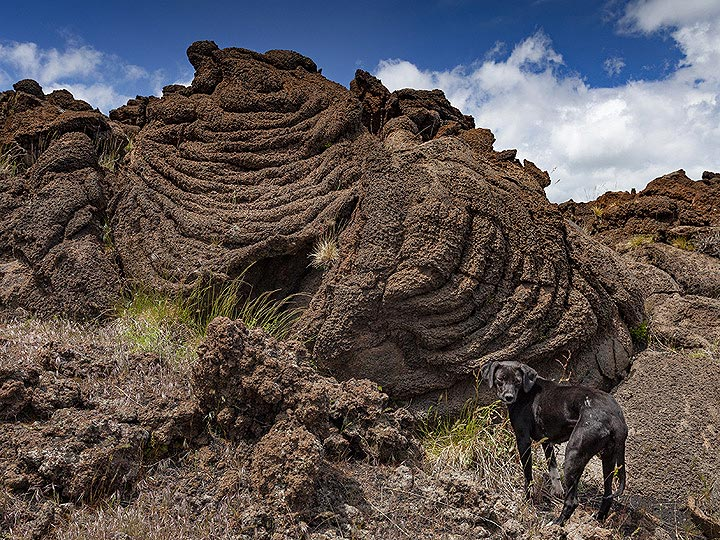 Our dog in front of the rope lavas. (Photo: Tobias Schorr)