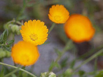 Spring flowers at Taormina. (Photo: Tobias Schorr)