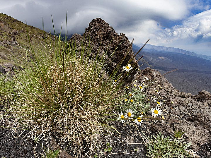 Nature at the edge of Valle del Bove on Etna volcano. (Photo: Tobias Schorr)