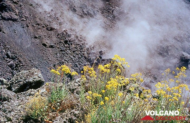 The front of the lava flow. (Photo: Tom Pfeiffer)