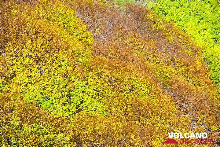 Yellow, brown and green. (Photo: Tom Pfeiffer)