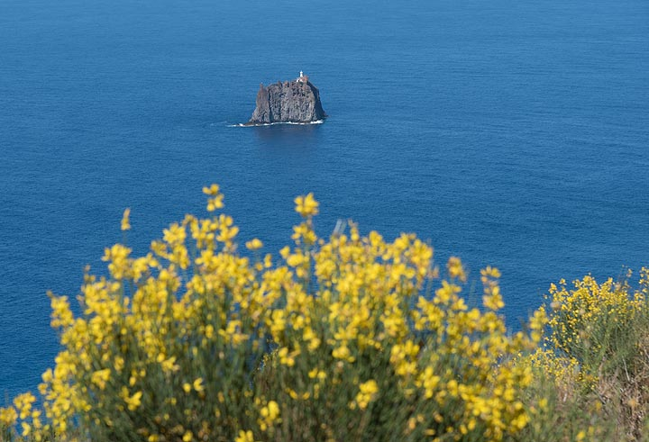 In June, the broom is in full flower. In the background, we see Strombolicchio Island, the eroded remnant of an older volcanic edifice. (Photo: Tom Pfeiffer)