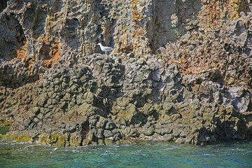 Lava rocks and a seagull (Photo: Tom Pfeiffer)