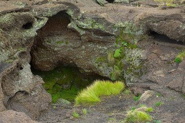 Green grass, moss and lychen cover the rocks at the entry of the cave, obviously more humid than the surroundings. (Photo: Tom Pfeiffer)