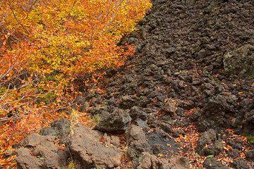 Black lava and autumn colors (Photo: Tom Pfeiffer)