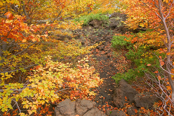 Coloful autumn  (Photo: Tom Pfeiffer)