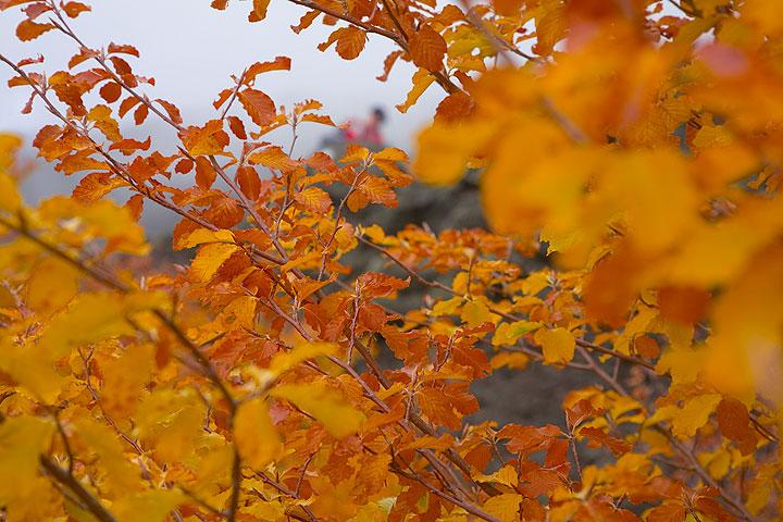 Yellow and orange leaves (Photo: Tom Pfeiffer)