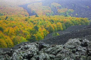 Lava flows from the NE rift zone have often invaded the beautiful forests on this side of Etna. (Photo: Tom Pfeiffer)