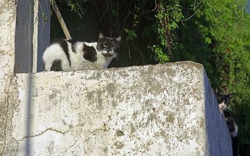 Black and white cats from the house of cats... (Photo: Tom Pfeiffer)