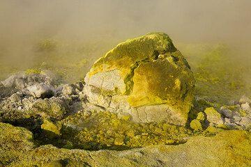 Sulphur colvered breadcrust bomb (Photo: Tom Pfeiffer)