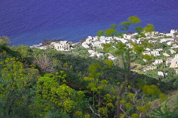 View onto the houses of Picità from the spring-time macchia on Stromboli.  (Photo: Tom Pfeiffer)
