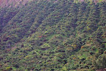 Erosion gullies on the steep flank of the Fossa volcano, Vulcano Island. (Photo: Tom Pfeiffer)