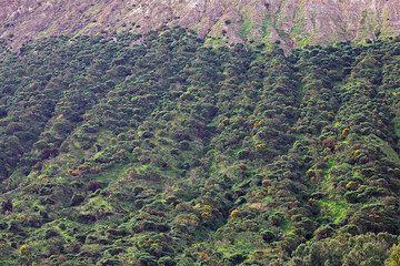 Erosion gullies on the flank of Fossa volcano, Vulcano Island (Photo: Tom Pfeiffer)