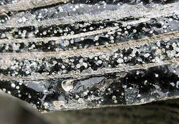 Obsidian (Photo: Tom Pfeiffer)