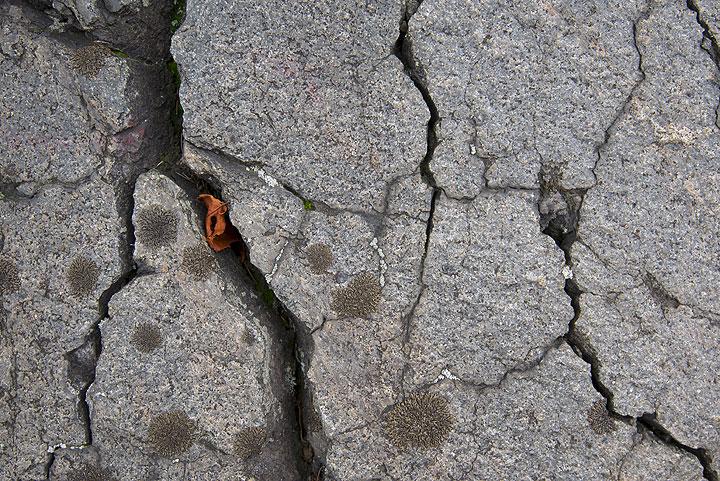 Surface of basaltic-andesitic breadcrust bomb from Azuma volcano (Honshu, Japan) (Photo: Tom Pfeiffer)
