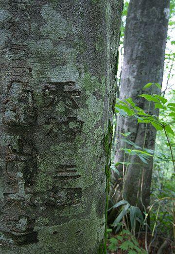 japan_j01412.jpg (Photo: Tom Pfeiffer)