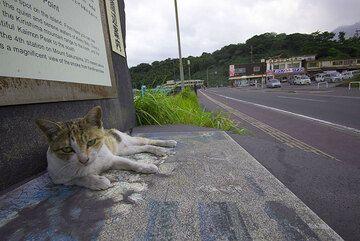 This cat doesn't seem to mind the ash that often falls near the Sakurajima ferry port (Photo: Tom Pfeiffer)