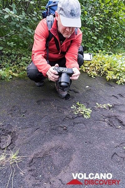 Ronny examines a rather fresh bear's footprint on the ash plain. (Photo: Tom Pfeiffer)