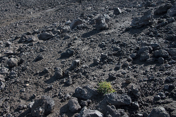Vegetation becomes more and more sparse as we gain altitude and the ground is made of young lavas. (Photo: Tom Pfeiffer)