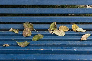 Autumn leaves (Photo: Tom Pfeiffer)