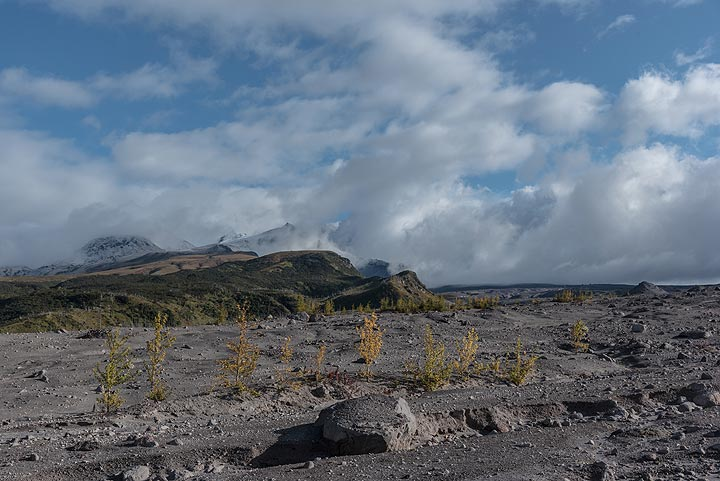 View towards the summit of Sheveluch and its lava dome, both remaining hidden in clouds, unfortunately. (Photo: Tom Pfeiffer)