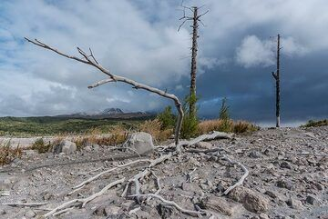 Skeletons of trees killed by pyroclastic flows about 3-5 years ago remind us that it's not a good idea to stay very long at this place. (Photo: Tom Pfeiffer)