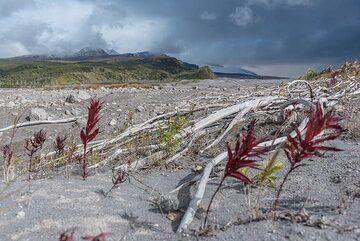 New life grows on the devastation area. (Photo: Tom Pfeiffer)